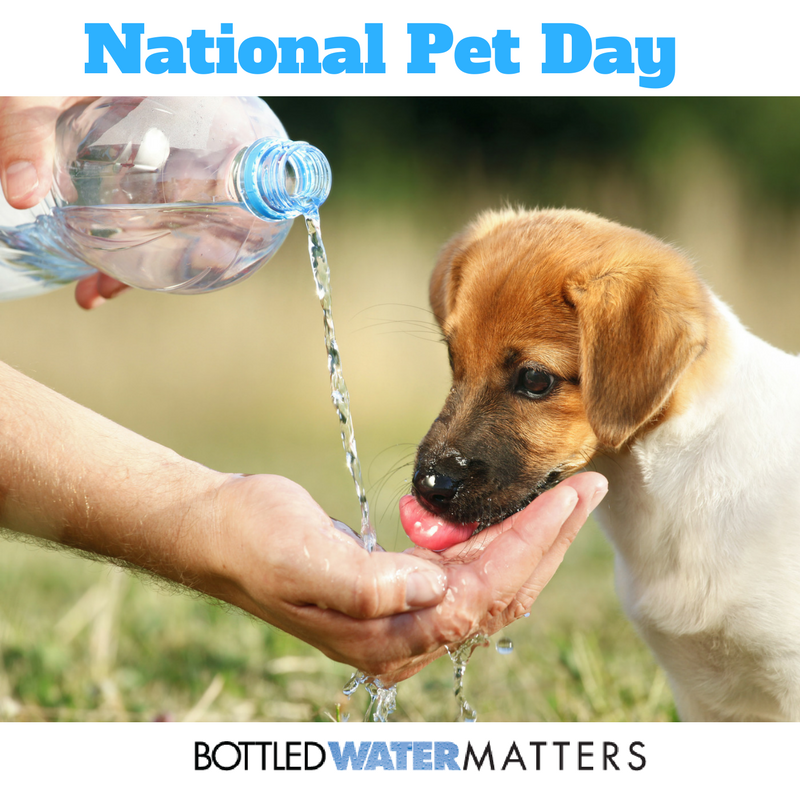 National Pet Day 1 1, Bottled Water | IBWA | Bottled Water